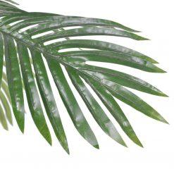 palmeira Cycus